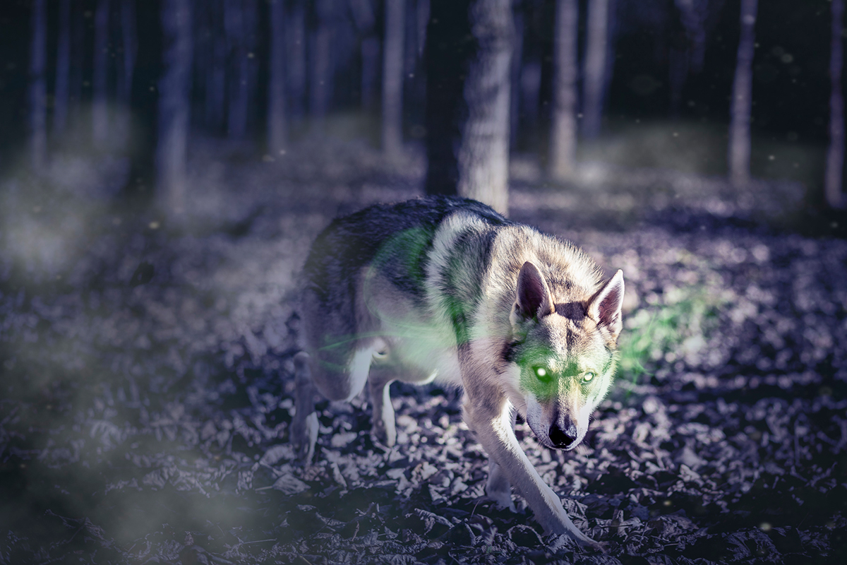 Wolf Photo composing Dario Nicolai Viterbo